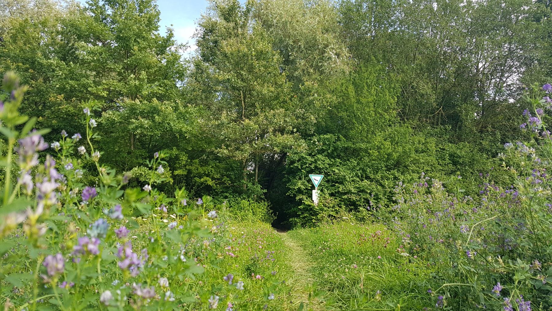 """Frauenweilerwiesen: Der """"Eingang"""" zum Naturschutzgebiet."""