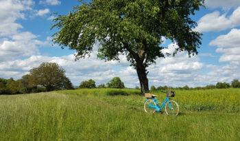 Blaues Hollandrad auf einer Wiese